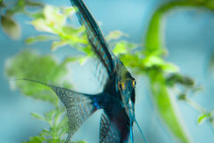 egzot ryba Zdjęcia Royalty Free