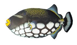 egzot ryba Fotografia Stock