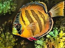 egzot ryba Obraz Stock