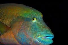 egzot ryba Zdjęcie Royalty Free