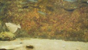 Egzot ryba pływanie w akwarium zbiory