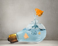 Egzot ryba w żarówce Obrazy Royalty Free