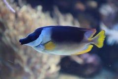 Egzot ryba w morzu Zdjęcie Stock