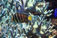 Egzot ryba w morzu Zdjęcia Stock