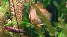 Egzot ryba w St Petersburg oceanarium Obraz Royalty Free