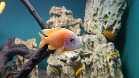 Egzot ryba w St Petersburg oceanarium Obraz Stock