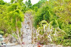 Egzot zasadza niedalekie antykwarskie ruiny Obraz Stock