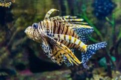 Egzotyczna koral ryba w akwarium Zdjęcia Stock