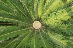 Egzotyczna roślina przeglądać od above Obrazy Stock