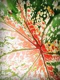 Egzotyczna roślina zdjęcia royalty free