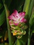 Egzotyczna roślina od Mauritius Obrazy Royalty Free