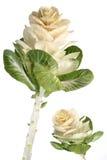 egzotyczne kwiat Fotografia Royalty Free