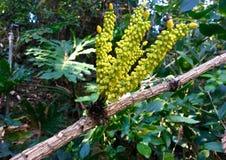 egzotyczne kwiat Zdjęcia Stock