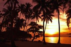 egzotyczne na plaży Obrazy Royalty Free