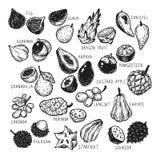 Egzotyczne owoc, set Zdjęcie Stock