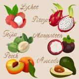 egzotyczne owoce tropikalne ilustracja wektor