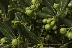 egzotyczne roślinnych Zdjęcie Stock