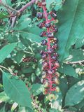 egzotyczne rośliny Fotografia Royalty Free