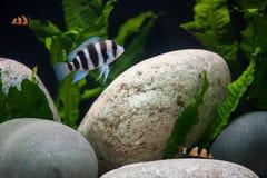 Egzotyczne ryba Fotografia Royalty Free