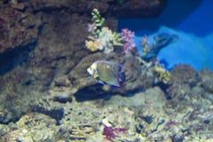 egzotyczne ryby zdjęcia stock