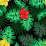 Egzotycznego tropikalnego natury środowiska wielostrzałowy deseniowy tło Obrazy Royalty Free