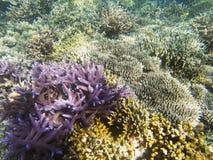 Egzotycznej wyspy denny brzeg Tropikalnego seashore krajobrazu podwodna fotografia Obrazy Royalty Free