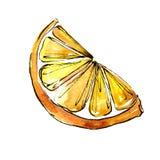 Egzotyczni cytryna cytrusy w akwarela stylu odizolowywającym ilustracji
