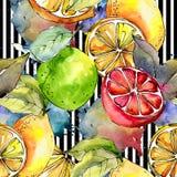 Egzotyczni cytryna cytrusy w akwarela stylu wzorze ilustracja wektor