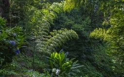 Egzotyczni drzewa i kwiaty w ogródzie botanicznym w Batumi zdjęcia stock