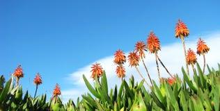 egzotyczni kwiaty Obraz Royalty Free