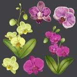 Egzotyczni orchidea kwiaty Ustawiający Tropikalni Kwieciści elementy dla dekoraci, wzór, zaproszenie Zwrotnik Kwitnie tło Zdjęcia Stock