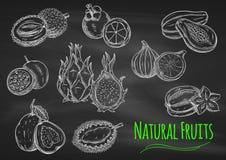 Egzotyczni owoc kredy nakreślenia na blackboard Obraz Royalty Free