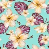 Egzotyczni plumeria kwiaty i purpurowy monstera opuszczają w bezszwowym tropikalnym wzorze Jaskrawy błękitny tło, żywi kolory ilustracji