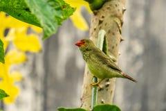 Egzotyczni ptaki i zwierzęta w przyrodzie w naturalnym położeniu zdjęcia stock