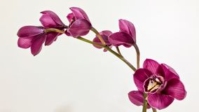 Egzotyczni purpura kwiaty Fotografia Royalty Free