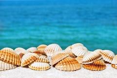 Egzotyczni seashells na tle ciepły lata morze Zdjęcie Stock
