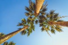 Egzotyczni tropikalni drzewka palmowe przy latem, widok od dna do nieba przy słonecznym dniem Obrazy Royalty Free