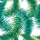 Egzotyczni tropikalni liście ilustracji