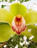 egzotyczny kwiat Obrazy Stock