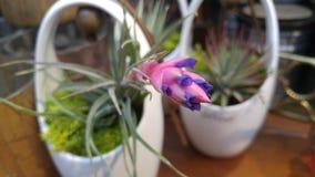 Egzotyczny kwiat w białej wazie Zdjęcia Stock