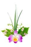 egzotyczny kwiatu bukiet odizolowywa na bielu Zdjęcie Stock
