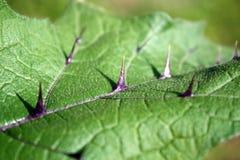 egzotyczny liść Fotografia Stock
