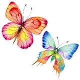 Egzotyczny motyli dziki insekt w akwarela stylu odizolowywającym royalty ilustracja