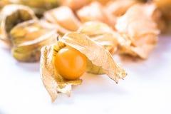 Egzotyczny owocowy Psyhalis Obraz Stock