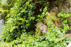 Egzotyczny ptak wśród liści Obrazy Stock