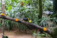Egzotyczny ptasi obsiadanie na drzewie w lesie obraz stock