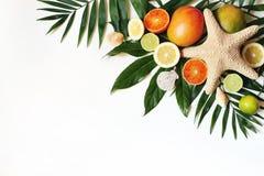 Egzotyczny skład seashells, rozgwiazda, mango, cytryny, pomarańcze, wapno owoc i bujny palmy zieleni liście odizolowywający dalej obrazy royalty free