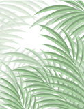 Egzotyczny tło z palmowymi liśćmi dla projekta w modnisia stylu Obrazy Stock
