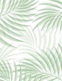 Egzotyczny tło z palmowymi liśćmi dla projekta w modnisia stylu Obraz Royalty Free