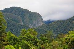 Egzotyczny tropikalnego lasu deszczowego krajobraz Obrazy Royalty Free